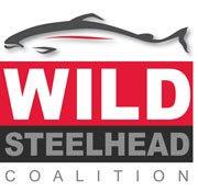 wild steelhead cololition